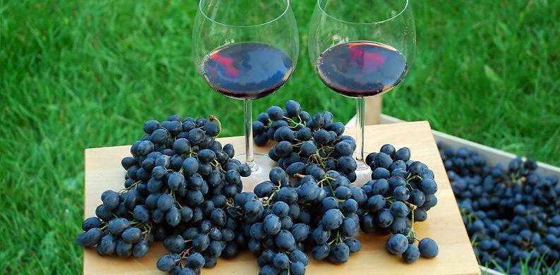 elaboracion de vino segun la uva