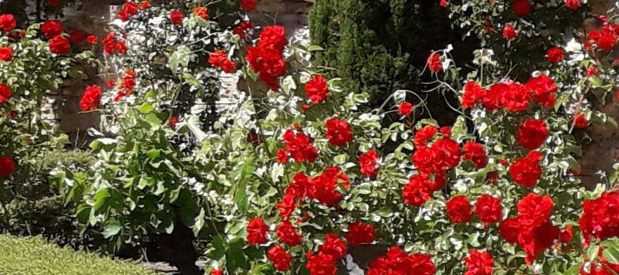 jardin-primavera